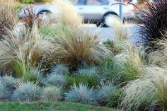 ornamental grasses for front of house landscaping ideas for