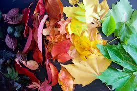 leaf chromatography playdough plato