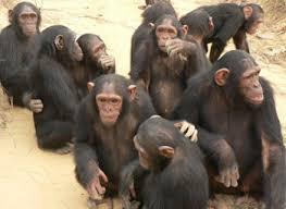 القرود انواعها  ونبذه عنها والصور Images?q=tbn:ANd9GcQVU7lgYRgRv9jWsIBUxF-0SuBQZLnDq4hZSRe5Lvn-5itJvg_x