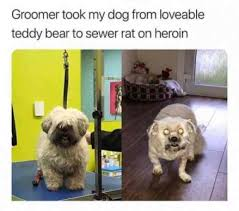 Heroin Meme - groomer took my dog from loveable teddy bear to sewer rat on heroin