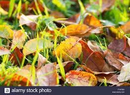 autumn leaves photo background seasonal concepts stock photo