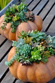 resume modernos terrarios suculentas succulents in pumpkins basket pinterest suculentas terrario