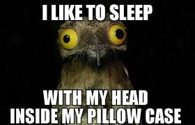 Crazy Bird Meme - weird stuff i do potoo know your meme