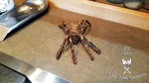 cocoa spiders coming soon eat the dead halloween food and