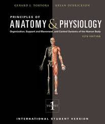 Lab Practical Anatomy And Physiology Anatomy And Physiology 2 Quizlet Study Tips For Anatomy And