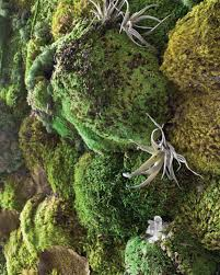 how to make a faux living moss wall hgtv