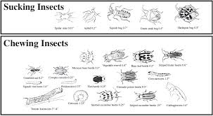 insects identification and control mississippi state university
