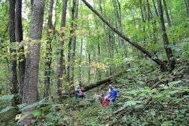 Georgia forest images Cooper creek sierra club JPG