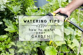 Good Garden Vegetables by How To Water Your Garden Watering Tips