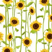 sunflower fabric wallpaper gift wrap spoonflower