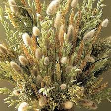 mixed ornamental grass seeds on sale in ireland shop now