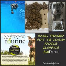 how hazel discovered avoderm natural pet food ad avodermnatural