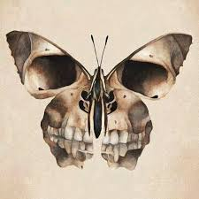 collection of 25 skull butterfly sle