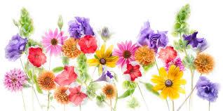 flowers for harold davis 2014 august