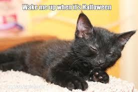halloween meme funny cat meme quote funny humor grumpy kitten wallpaper 3504x2336