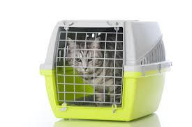 gerüche die katzen nicht mö transport katzen im auto