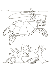 holden beach turtle watch kids color