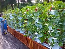 hydroponic vertical garden gardening with hydroponics in soil