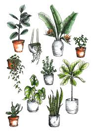 Best Indoor Plants For Oxygen by How To Care For Indoor Plants A Pair U0026 A Spare
