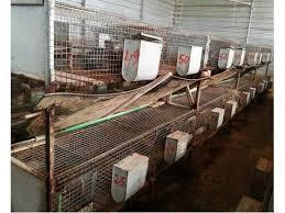gabbie per conigli nani usate gabbie conigli fattrici clasf