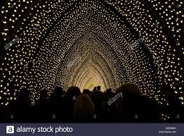 tunnel of light in the royal botanical gardens sydney australia