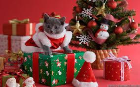 cat christmas christmas cat wallpapers frankenstein