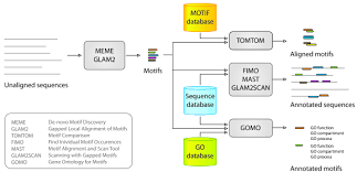 Meme Motif Search - the meme suite of motif based sequence analysis tools