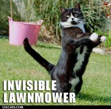 Invisible Cat Memes - invisible lawnmower cat meme cat planet cat planet