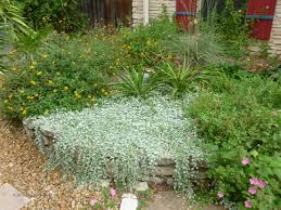 native north texas plants horseherb my gardener says u2026