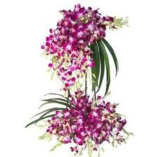 Orchid Delivery Buy Purple Orchid Arrangement Express Delivery Online Best