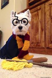 Puppy Halloween Costumes 25 Dogs Costumes Ideas Puppies