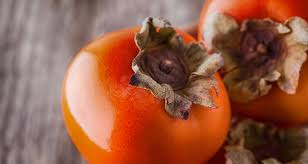 the persimmon lady shares her winter forecast farmers u0027 almanac