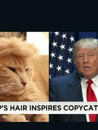 Erin Meme - 150714204025 moos trump your cat meme erin 00000918 exlarge 34 jpg