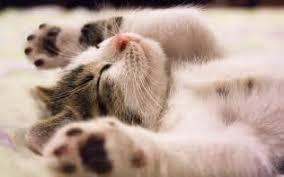 Barn Cat Names Original Cat Names Female Best Photos Animals 2017