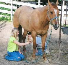 How To Tell If A Horse Is Blind Horseman Tips Think Like A Horse