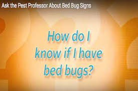 How To Check For Bed Bugs At Home Where Do Bed Bugs Come From Identify Bed Bugs Info