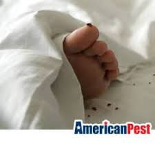 Small Black Bugs In Bed How To Tell The Difference Between Bed Bugs And Carpet Beetles