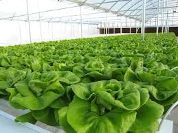 how hydroponic gardening is different from regular gardening