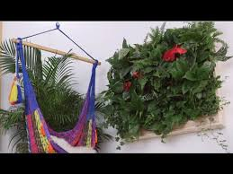 how to make a diy indoor living plant wall eye on design youtube