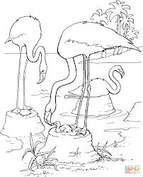 flamingos coloring pages free coloring pages