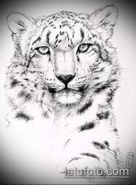 old snow leopard sketch that i drew with a pentel aquash as a gift