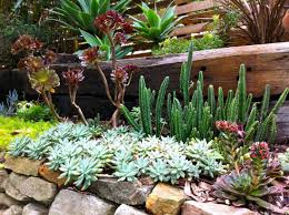 the most poisonous plants in australia hipages com au low maintenance plants that will bloom year round hipages com au