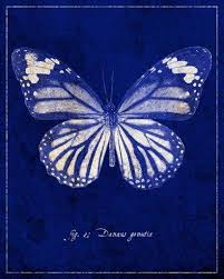 common tiger butterfly cyanotype blue print cobalt