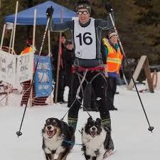 skiing with australian shepherd spokane skier dogs headed to world skijoring championships the