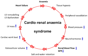 anaemia and renal dysfunction in chronic heart failure heart