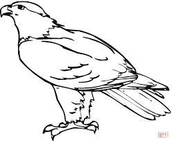 hawk 24 coloring free printable coloring pages