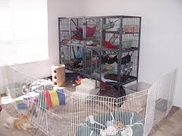 All Living Things Luxury Rat Pet Home by Best 20 Ferret Cage Ideas On Pinterest Rat Cage Hedgehog