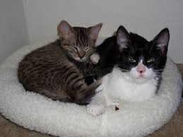 Kitten Bed Stacy And Oscar Hunt Fry And Leela The Kitten Months