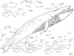 articles jonah whale color sheet tag jonah whale