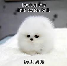 Cute Baby Animal Memes - animal pictures memes read op before posting off topic